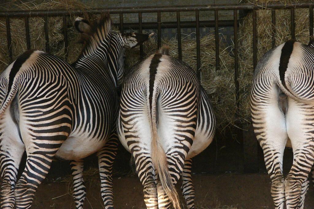 Сантандер - зоопарк Кабарсено